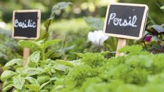 Organiser son potager : 9 idées inspirantes à mettre en pratique dès aujourd'hui Organiser, Place Cards, Hui, Place Card Holders, Blog, Gardens, Garden Deco, Herbs, Plants