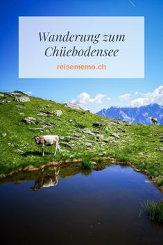 Swiss Travel, Mountains, Nature, Europe, Road Trip Destinations, Voyage, Places, Nice Asses, Naturaleza