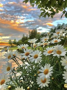 Beautiful Nature Pictures, Beautiful Flowers Wallpapers, Nature Photos, Beautiful Landscapes, Beautiful Gardens, Beautiful Places, Nature Photography Flowers, Flowers Nature, Nature Nature