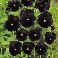 24 Best Flowers images in 2014 | Flowers, Flower seeds, Planting Flowers