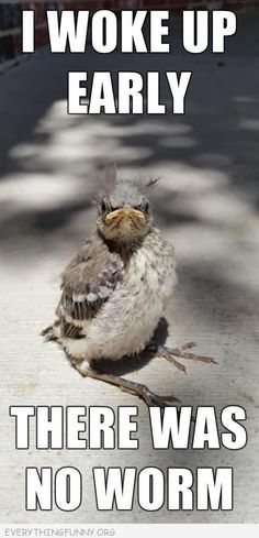 Funny Bird Pictures with Captions | funny caption ugly bird i got up early there was no worm