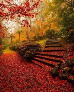 Breenhold Gardens, Mt Wilson. Australia Photo by @kalanrobb
