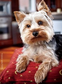 Fred is a Yorkshire terrier who uses the seductive power of his puppy eyes to sell greeting card box sets and e-cards. Proceeds from sales benefit uninsured, HIV-positive youth.
