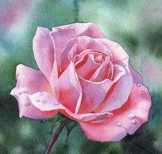 AS FRESH AS MAY rose floral watercolor painting, painting by artist Barbara Fox