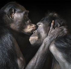 20 Animales besándose que demuestran que los besos no son solo para las personas
