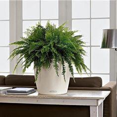 Топ-9 комнатных растений, которые увлажняют воздух в доме и дарят здоровье - Я Покупаю Leroy Merlin, Planter Pots, Products, Beauty Products