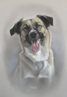 Dog art by Amy Little.  Tobi, 2015.  Soft pastel on Mi-Teintes pastel paper.