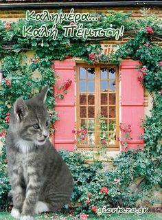 καλημερα γατουλα Cats, Animals, Gatos, Animales, Animaux, Animal, Cat, Animais, Kitty