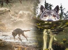 Morski vukovi - neobični ribolovci zapadne Kanade