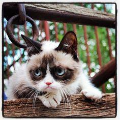 I adore grumpy cat. Grumpy Cat Quotes, Funny Grumpy Cat Memes, Funny Cats, Grumpy Kitty, Funny Pix, Funny Stuff, Funny Sayings, Cat Stuff, Baby Animals
