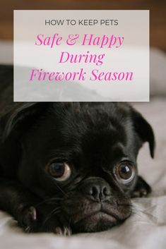 How to Keep Pets Safe & Happy During Firework Season Autumn Activities, Craft Activities For Kids, Dogs And Fireworks, Bonfire Night Food, Diy Halloween Food, Dog Illnesses, Fun Arts And Crafts, Guy Fawkes, Pet Safe