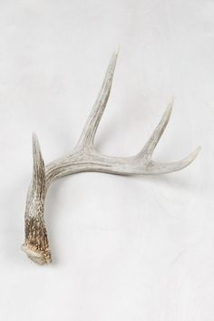 Image result for deer antlers