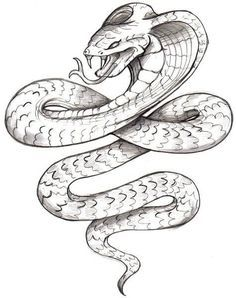 Tattoo Outline Drawing, Snake Drawing, Snake Art, Outline Drawings, Animal Drawings, Snake Outline, Drawing Tattoos, Watercolor Tattoos, Tattoo Designs