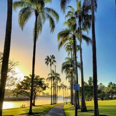 Morning bliss at Newstead Park #thisisqueensland photo @lady_brisbane