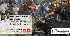 Firma por el fin del Toro de la Vega, ayúdanos con tu firma para pedir al PSOE que impida la celebración del torneo