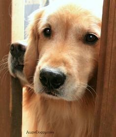 Can we come in now? :)