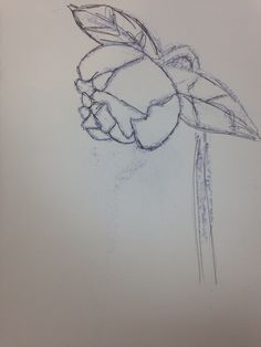Using the ink that went through the page I used as inspiration and went for a more simple line drawing of the rose.