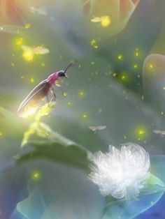Beautiful Fantasy Art, Beautiful Gif, Beautiful Birds, Good Morning Animation, Good Morning Gif, Gif Pictures, Nature Pictures, Adorable Petite Fille, Good Morning Beautiful Pictures