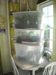 Gardeners turn to mini greenhouse gardening when they need to create a specific microclimate or lack space for a larger. the Mini greenhouse can be used for protected crops such as tomatoes, peppers, cucumbers and aubergines. Greenhouse Kits For Sale, Indoor Greenhouse, Greenhouse Plans, Greenhouse Gardening, Container Gardening, Homemade Greenhouse, Portable Greenhouse, Diy Small Greenhouse, Pallet Greenhouse