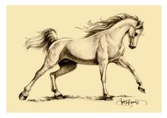 Horse Drawings | Arabian horse drawing for the Exmoor White Horse Inn