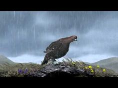 Famous Grouse urges public to enjoy the 'famous British summer' in new ad