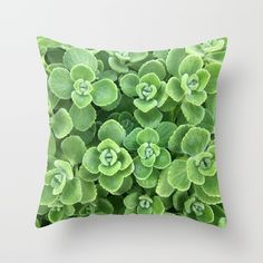 #botanical #green #decorating #home #plant #succulents #shopping #bringoutsidein #interiordecor #buyonline
