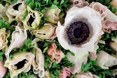 White blush anemones at New Covent Garden Flower Market - November 2014 New Covent Garden Market, Flower Identification, Anemones, Flower Market, London Wedding, November, Blush, Marketing, Black And White