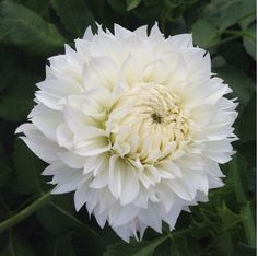 If your garden needs a pop of colour, flower farmer Sarah Nixon shares the best perennials to plant in Canada and how to care for them. Best Perennials, Flowers Perennials, Planting Flowers, Bright Flowers, Fall Flowers, Summer Flowers, Easiest Flowers To Grow, September Flowers, Growing Dahlias