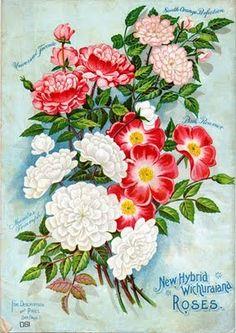 http://4.bp.blogspot.com/_c6Cy0yfb1J8/SuTN40tipRI/AAAAAAAAGWg/HY_ACRffvng/s400/seed10.jpg