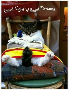 Cat nap or cat reading? I Love Cats, Crazy Cats, Cute Cats, Funny Cats, Funny Animals, Cute Animals, Funny Humor, Funny Stuff, Funny Quotes