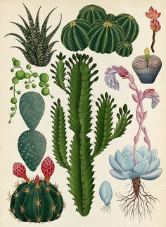 botanical illustration by Emma Love