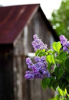 Purple flowers in the country