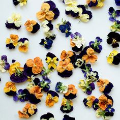 Pictures Of Edible Flowers ... For more Image Visit Link