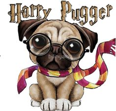 Harry Pugger