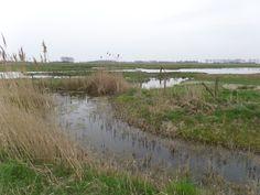 Vogelrustgebied de Grote Putting nabij Hengstdijk - Wendy de Roover