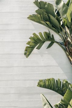Surfrider Malibu — M. Leaves Wallpaper Iphone, Et Wallpaper, Plant Wallpaper, Tumblr Wallpaper, Aesthetic Backgrounds, Aesthetic Iphone Wallpaper, Aesthetic Wallpapers, Plant Aesthetic, Nature Aesthetic