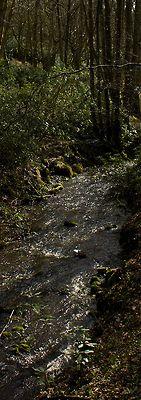 Stream at Scorton on Flickr.