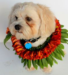 My dog on his birthday.. perfect for holiday gift too..