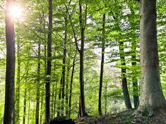 Der unternehmenseigene Wald in Eggerding speichert im Jahr ca. 865 Tonnen CO2. (Foto: Team 7) #team7 #naturholz #möbel #nachhaltigkeit #adgermany Nachhaltiges Design, Plants, Life Cycles, Water Cycle, Greenhouse Gases, Upcycling, Flora, Plant, Planting