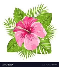 Beautiful Pink Hibiscus Flowers Blossom and Vector Image Beautiful Pink Hibiscus Flowers Blossom and Tropical Flowers, Motif Tropical, Hawaiian Flowers, Tropical Leaves, Exotic Flowers, Purple Flowers, Blossom Flower, Flower Art, Cactus Flower