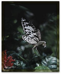 Zebrafly!