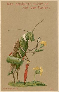 Dressed Grasshopper Scientist Examines Flower, postcard by Meissner