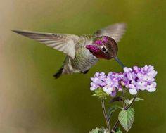 A beautiful  hummingbird.