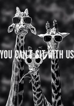 YOU CAN'T SIT WITH US..omg! For Luci and Dot..~~mean girls quote~~