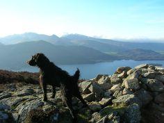 Dog walking the Lake District
