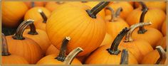 Pittsburgh Area Fall Festivals & Pumpkin Patches 2013