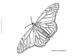 monarch butterfly coloring page - Monarch Caterpillar Coloring Page