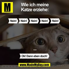 Katzenerziehung  geht nicht