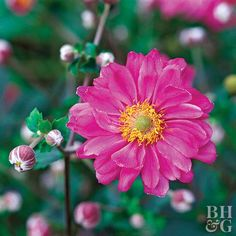 Perennials are designed to grow back year after year, even when the winter strikes.
