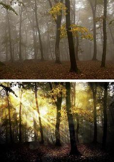 Bosque encantado... #rotoquefotografico #bosque #hadas #antesydespues